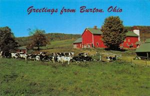 Burton Ohio~Holstein Cows Near Barn & Chicken Coop~Greetings 1950s