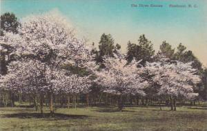 North Carolina Pinehurst The Three Craces Albertype