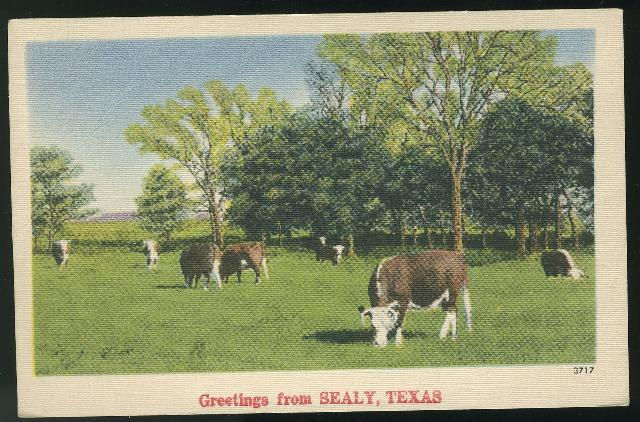 Greetings From Sealy Texas Steer Cattle Linen 1946