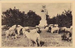 RP, Radegast na Radhostl, Beskydy, Sheep, 1910-1920s