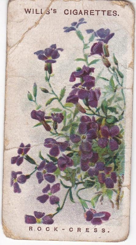 Cigarette Cards Wills Alpine Flowers No 8 Rock-Cress