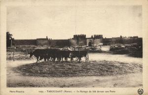 CPA MAROC FLANDRIN (1255)- TAROUDANT- Le battage du ble devant une (114102)