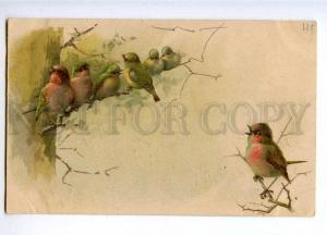 189886 Colorful BIRDS Singing Song Vintage Russian LITHO PC