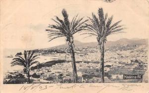 Portugal Madeira General Aerial Panorama, Palm Trees 1903