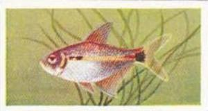 Mitchum Foods Vintage Trade Card Aquarium Fish 1957 2nd Series No 47 Head & T...