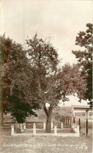 Oldest Apple Tree NW Vancouver Washington #P128 RPPC Photo Postcard 21-38