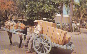 Bahamas Nassau Native Two Wheel Cart Delivering Merchandise