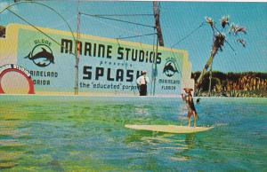 Florida Marineland Fifi Rides The Surfboard