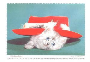 White Kitten Under Red Hat, Photo Jim & Pat Pond