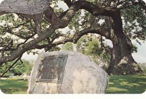 Council Oak in Highland Cemetery - South Bend IN, Indiana