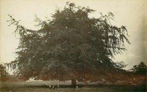 RPPC Postcard Calderstone Liverpool Giant Tree Children Playing