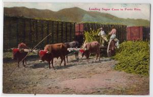Loading Sugar Cane, Porto Rico