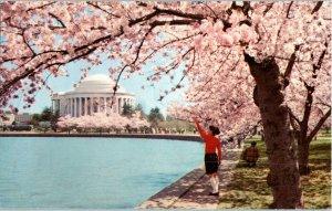 Cherry Trees Thomas Jefferson Memorial Washington DC Postcard
