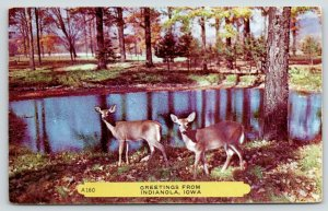 Indianola IA~Fawns by Pond Like Deer in Headlights~Methodist Church Fire~1956