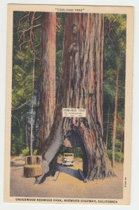 P2222, 1941  postcard red wood highway tree tunnel with old car cali