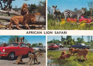 Lions, Zebras and Baboons, Africa Lion Safari, Peterborough, Ontario, Canada,...