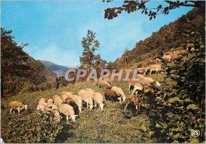 Postcard Modern Traveling Ariege Peaceful Scene Sheep in Pasture