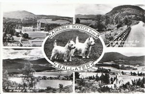 Scotland Postcard - A Double Scotch from Ballater - Real Photograph   MB1784