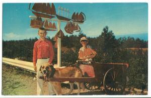 Canada, Gaspe Nord, Dog-Cart, Quebec, unused Postcard