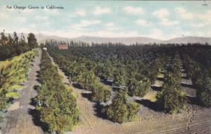 General view of an Orange Grove in California, 00-10s