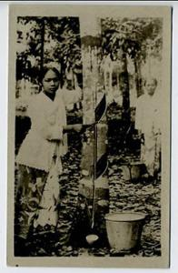 Singapore Strait Settlements China Rubber Trees RPPC Real Photo Postcard
