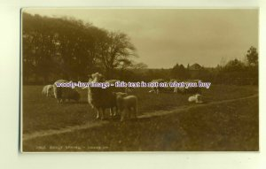 an0105 -  Early Spring, Sheep and their Lambs - Postcard - Judge's Ltd