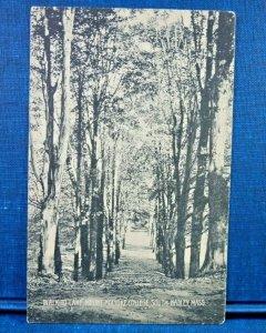 Walk to The Lake, Mount Holyoke, South Hadley, Mass. Antique Postcard