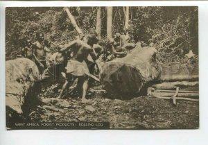 438888 AFRICA Sierra Leone Forest products Rolling Log Vintage postcard