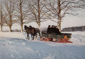 Mennonite Family Winter Snow Kitchener Canada Ontario Sleigh Postcard