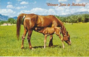 Mare and Foal Dinner Time In Kentucky The Bluegrass State