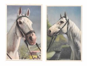 Thoroughbred Horses 2 Vintage Alfred Mainzer Postcards 354 355