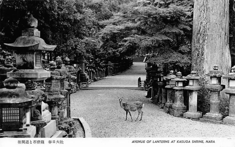 Japan Avenue of Lanterns at Kasuga Shrine, Nara Antelope