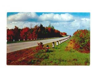 Paved Road,  Greetings from Morehead City, North Carolina