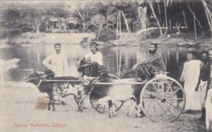 Sri Lanka Ceylon Racing Hackeries Ox Drawn Cart