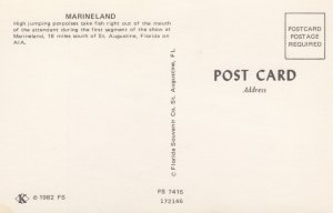Dolphins , Marieland of Florida , 50-60s