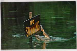 Alligator, No Swimming, Homosassa Springs FL