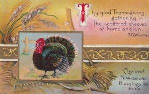 THANKSGIVING, 1900-10s; Wild Turkey, Poem by J. G. Whittier