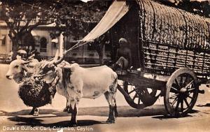 Colombo Ceylon, Ceylan Double Bullock Cart Colombo Double Bullock Cart