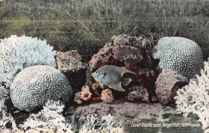 Coral Reefs and Angelfish, Bermuda, Early Postcard, Unused
