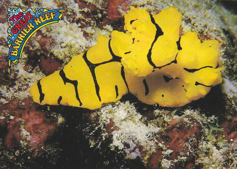 Colorful Nudibranch , The Great Barrier Reef , Queensland , Australia , 50-70s
