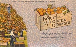 Fruit Assorted Fancy Florida Oranges Florida, USA Unused