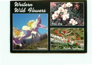 Postcard western Wild Flowers Sego Lily Indian Paintbrush Columbine    # 4037A