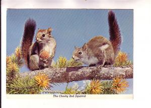 Two Cheeky Red Squirrels on a Branch, Made in Canada