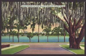 Success Avenue on Lake Morton,Lakeland,FL Postcard