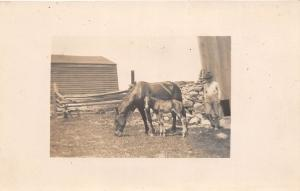 D92/ Horse Animal Real Photo RPPC Postcard c1910 Training Occupational Work 11