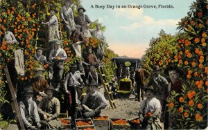 A Busy Day in an Orange Grove Florida FL Divided Back C.T. Photochrom Postcard