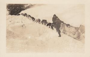 RP: Dog Team , Yukon , Canada , 1910s