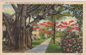 Banyan & Royal Poiciana Trees First Street North St Petersburg Florida 1940 C...
