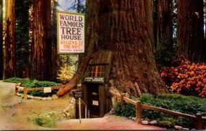 California Redwood Highway World Famous Tree House