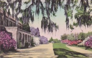 Middleton Place Gardens Charleston South Carolina Handcolored Albertype
